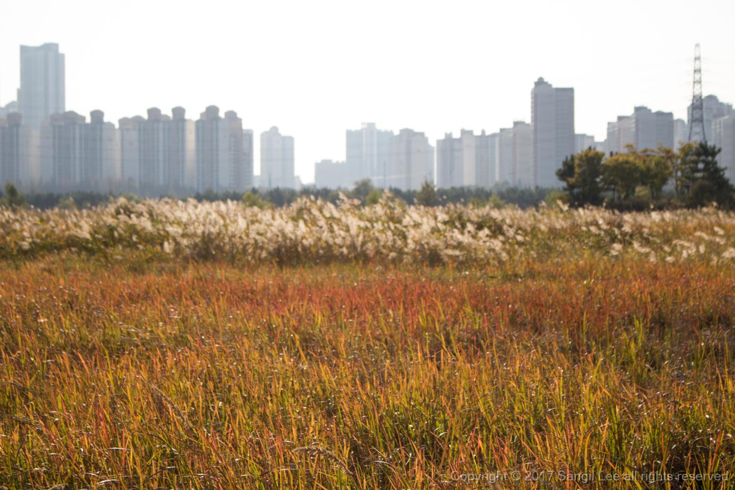 Sorae ecology park at Incheon